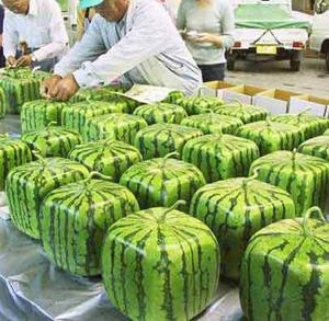 Squarewatermelon via Hardknoxlife