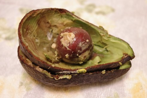 Avocado-skin via treehugger