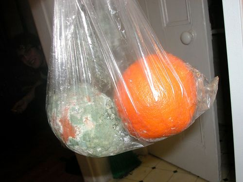 Moldy grapefruit via WaytenMom.blogspot_com