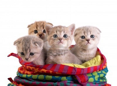Kittens in a bag via 123rf-com